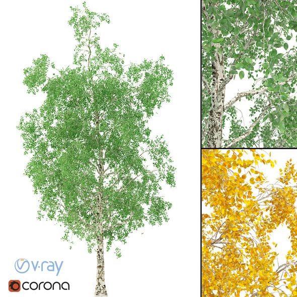 3DOcean Birch Tree 3D Model No 1 3 Seasons 21062967