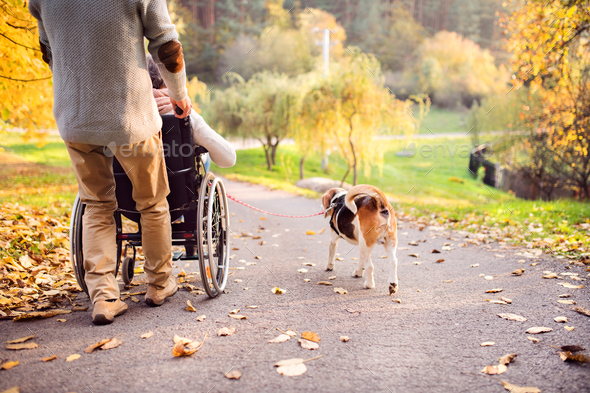 Senior man, woman in wheelchair and dog in autumn nature. - Stock Photo - Images