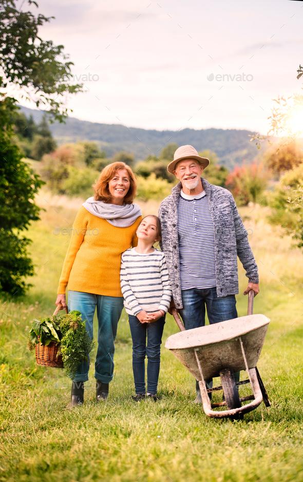 Senior couple with grandaughter gardening in the backyard garden - Stock Photo - Images