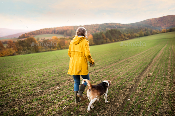 Senior woman with dog on a walk in an autumn nature. - Stock Photo - Images