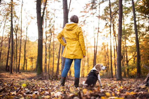 Senior woman with dog on a walk in an autumn forest. - Stock Photo - Images