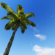 Tropical Heaven - VideoHive Item for Sale