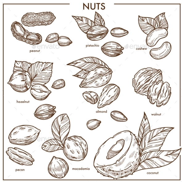 Nuts Sketch Icons Set - Food Objects