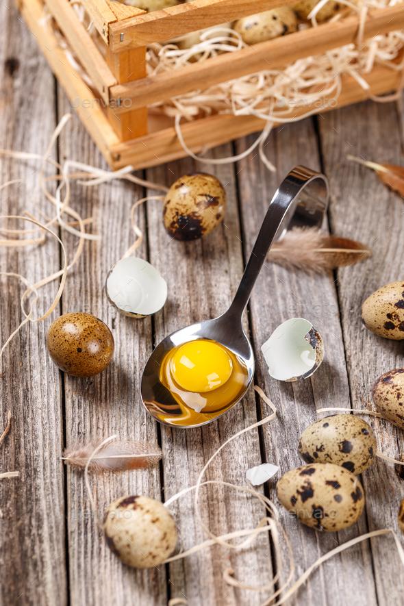 Fresh quail egg - Stock Photo - Images