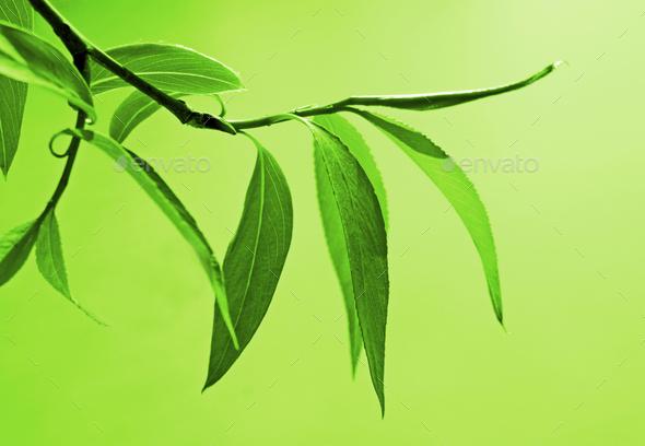 fresh green foliage - Stock Photo - Images