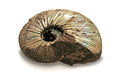 fossilized ammonite - PhotoDune Item for Sale