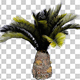 Sago Palm Tree - VideoHive Item for Sale