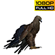 Eagle 4 Realistic - VideoHive Item for Sale