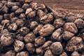 Sugar beet harvest - PhotoDune Item for Sale
