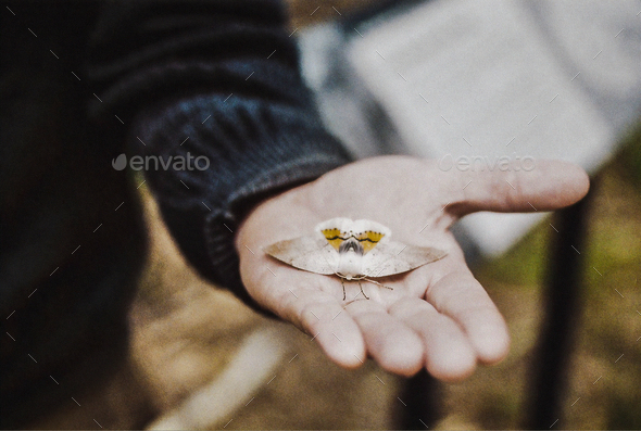 Moth in Hand - Stock Photo - Images