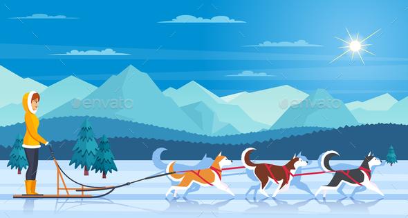 Sleddog Huskies Illustration - Sports/Activity Conceptual