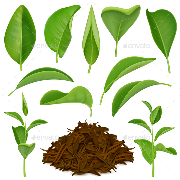 GraphicRiver Realistic Tea Leaves Set 21083151