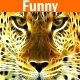 Comedy Funny Kids Light Adventure