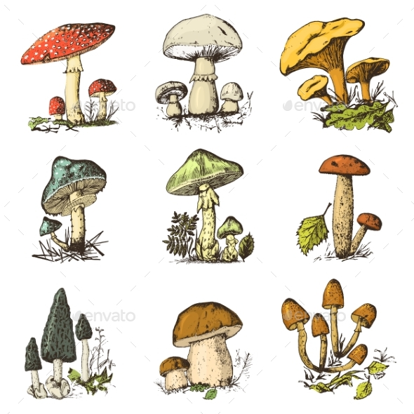 GraphicRiver Mushroom Set Hand Drawn Engraved Vintage Organic 21083761