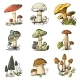 Mushroom Set Hand Drawn Engraved Vintage Organic