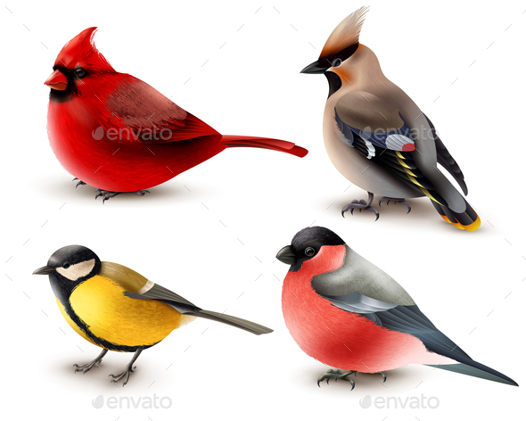 Winter Birds Set - Animals Characters