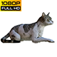 Cat 2 Realistic - VideoHive Item for Sale