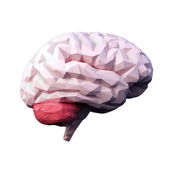 3DOcean Low Poly Brain 21085439