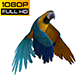 Parrot 3 Realistic - VideoHive Item for Sale