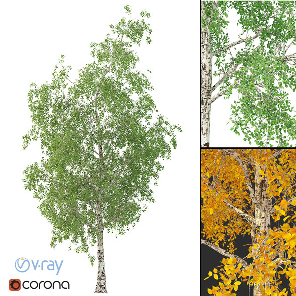3DOcean Birch Tree 3D Model No 2 3 seasons 21086188