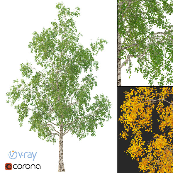 Birch Tree 3d Model No 3 (3 seasons) - 3DOcean Item for Sale