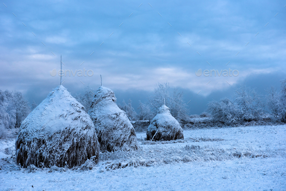 Snow covered haystacks. Winter rural scene - Stock Photo - Images