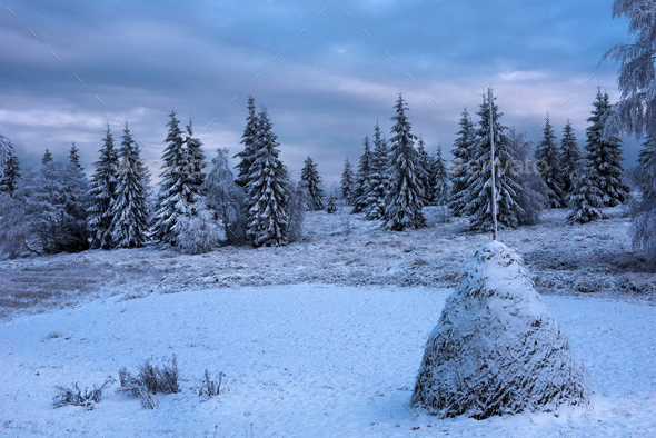 Snow covered haystacks in blue hour lights - Stock Photo - Images