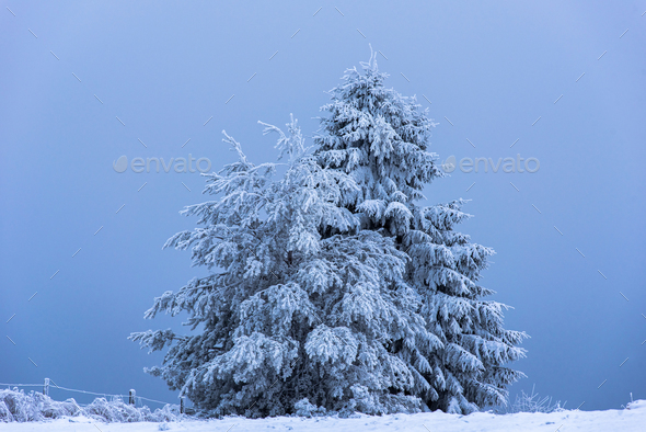 Winter mountain scene. Christmas fir tree covered with hoarfrost and snow - Stock Photo - Images