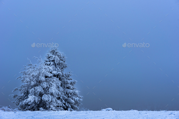 Snow covered fir tree. Space for text - Stock Photo - Images