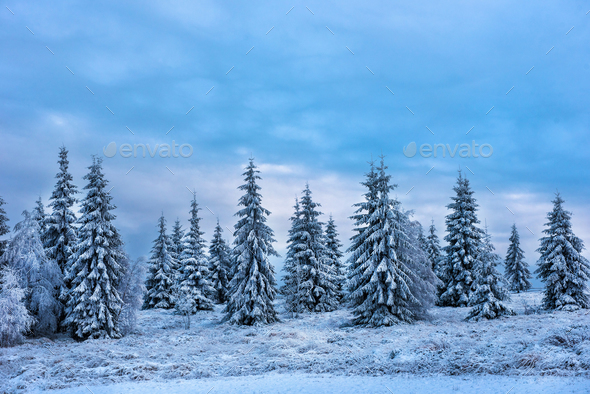 Beautiful winter landscape with snow covered trees. Christmas greetings concept - Stock Photo - Images