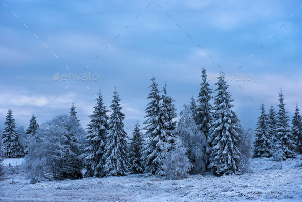 Winter landscape with snowy fir trees - Stock Photo - Images