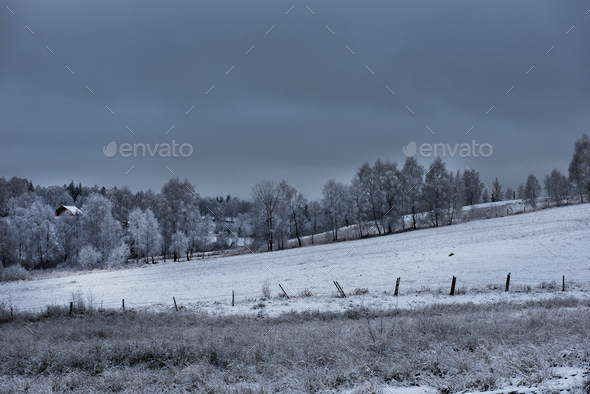 Christmas background with snowy fir trees. Christmas greetings - Stock Photo - Images