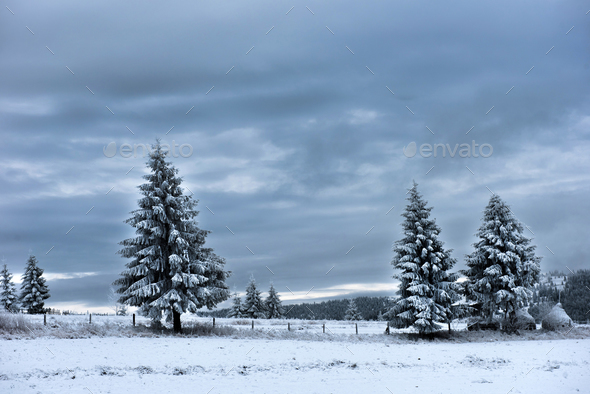Trees covered with hoarfrost and snow in mountains. Christmas greetings - Stock Photo - Images