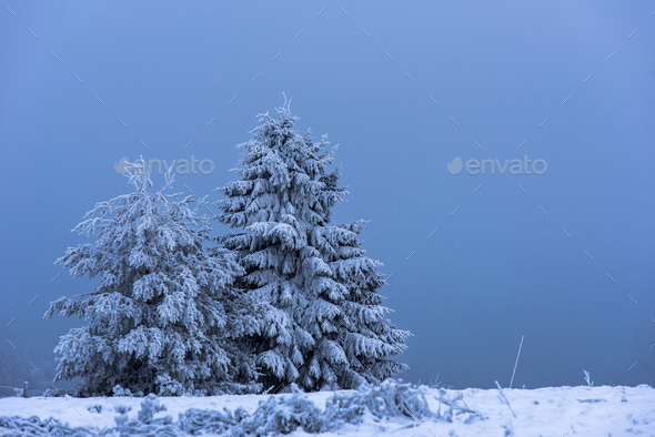 Fir tree covered with snow. Winter holidays concept - Stock Photo - Images