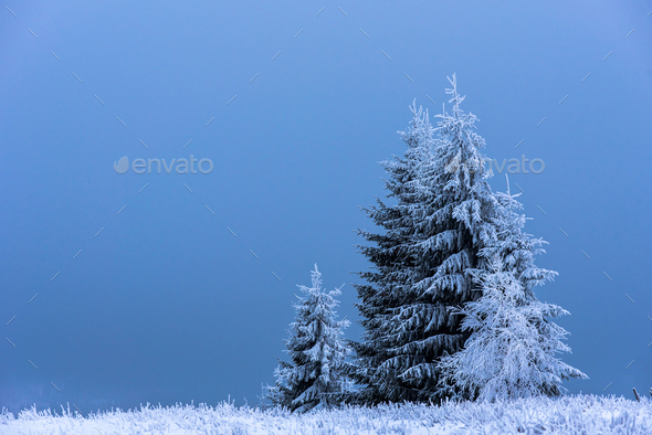 Fir trees at winter. Space for text - Stock Photo - Images