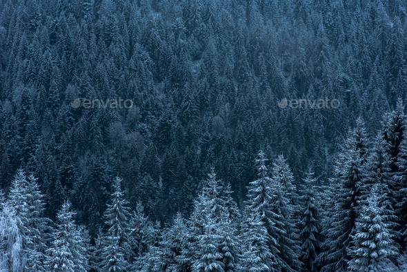 Winter landscape with snowy fir trees and forest. Christmas concept - Stock Photo - Images