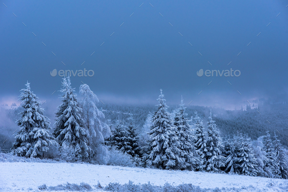 Winter landscape with snow covered fir trees - Stock Photo - Images