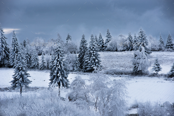 Majestic winter landscape. Fir trees covered by snow in the mountains - Stock Photo - Images
