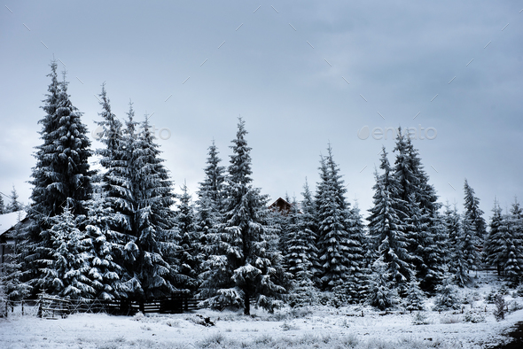 Beautiful winter landscape with snow covered trees. Christmas greetings - Stock Photo - Images