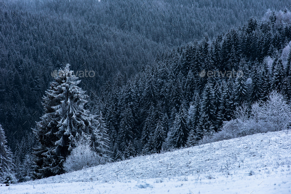 Winter landscape background with snowy fir trees and forest. Christmas greetings - Stock Photo - Images