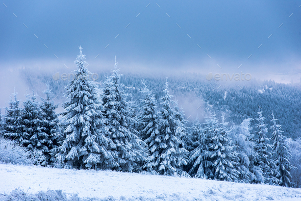 Winter landscape with snowy fir trees and forest - Stock Photo - Images