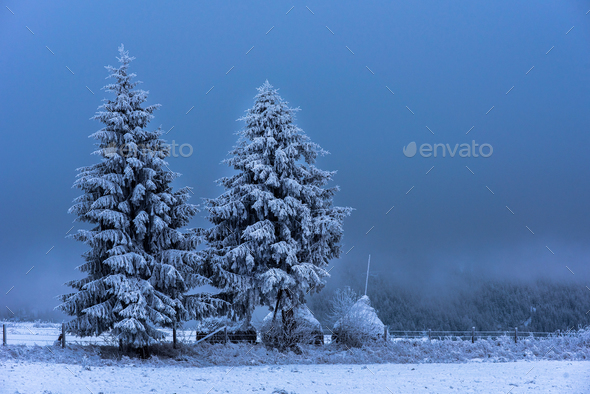 Christmas fir tree in the outdoors covered by snow - Stock Photo - Images