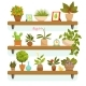 Home Plants and Decorative Flowers in Pots - GraphicRiver Item for Sale