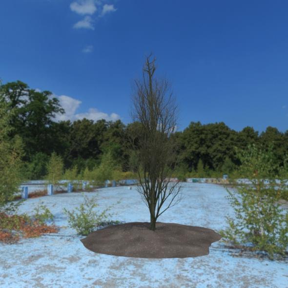 3DOcean 3D Tree 21087941