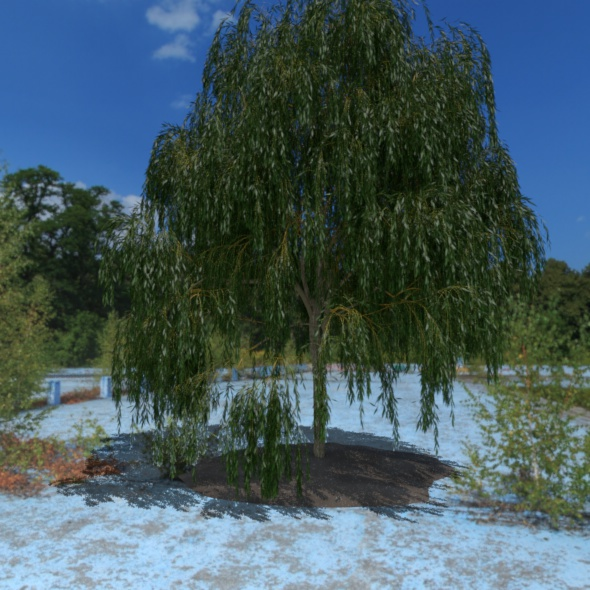 3D Tree - 3DOcean Item for Sale