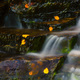 Autumn leaves on a waterfall - PhotoDune Item for Sale