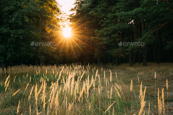 Sun Shining In Autumn Forest. Sunset Sunrise Dawn In Forest Land - Stock Photo - Images