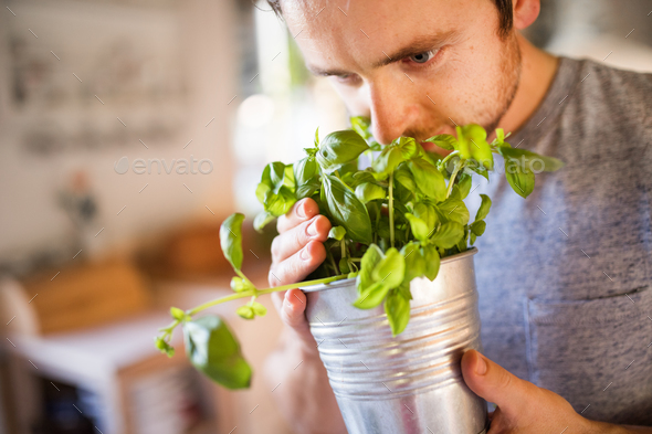 Young man cooking, holding herbs. - Stock Photo - Images