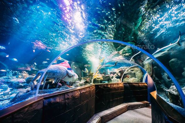 Underwater Tunnel In Oceanarium - Stock Photo - Images