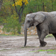Elephant in a clearing  - PhotoDune Item for Sale